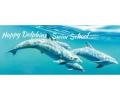 Happy Dolphin Swim School