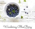 Wandering Blueberry