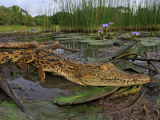 Le Bonheur Croc Farm