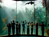 Two Oceans Aqarium
